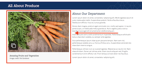 Screenshot of a landing page with several widgets, including a Photo Thumbnail with Gallery widget, featuring a photo of carrots